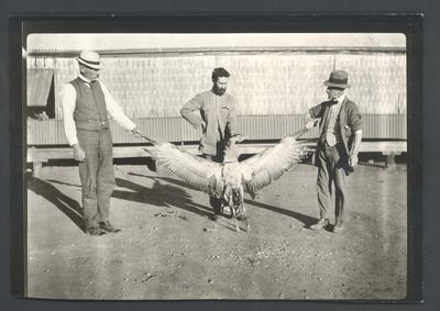 Photograph from Frank Laver's photograph album, travel scene c1918