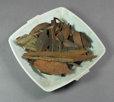 Leaves collected from Melbourne Cricket Ground, Ash Wednesday bushfires - 16 Feb 1983
