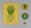 Programme & Badges - 1985 World Modern Pentathlon Championships